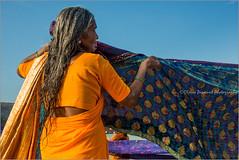 Gracefully.  Kanyakumari (Claire Pismont) Tags: asie asia inde india indedusud kanyakumari travel travelphotography tamilnadu pismont clairepismont colorful couleur color colour woman sari drying laundry beach documentory