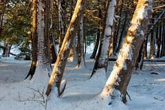 Tottenham Conservation (claudiu_dobre) Tags: tottenham conservation area ontario canada trees forest winters snow landscape nature newtecumseth ca