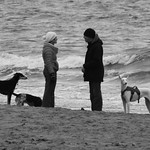 dogs and humans having seaside chat thumbnail