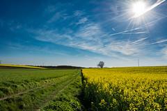 Paysage Campagne (christophe.beydon) Tags: nikon blanc nature nuage noir bleu extérieur effet 1855 d7100 soleil sunshine ciel campagne champ campaign chemin colza herbe horizon arbre france french fleurs