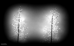 When The Humans Arent Nearby (rcvernors) Tags: whenthehumansarentnearby rcvernors rickchilders lights dark tree bw blankandwhite highcontrast twinkle light magictree