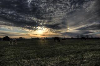 Sunset at a Kentucky Horse Farm