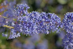 D174708A (RobHelfman) Tags: losangeles flowers kennethhahnstaterecreationarea