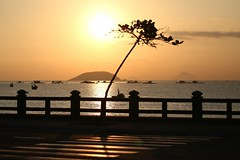 the crossing (PawL23) Tags: nhatrang khánhhòa vietnam sunrise goldenhour golden tree sea island silhouette reflection asia