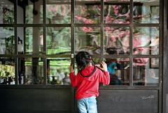 """童年時的""""窗外"""" (lgf55555(基福)) Tags: leica m6 noctiluxm 1150 kodak trix400 film red 窗 反射光 玻璃窗 兒童 紅衣 落地窗"""