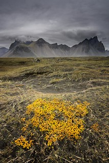 Autumn colors at Vestrahorn
