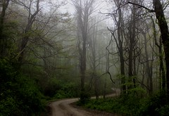 ~ winding road ~ (Lisa Holder NC) Tags: road woods forest mist winding curved nature scenic landscape trees serene peaceful calm tranquil