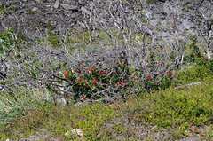 imgp3721 (Mr. Pi) Tags: andes shrubs chile torresdelpaine hills shrubland flowers patagonia nationalpark
