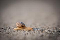_KJR5650.jpg (kellyjrusso) Tags: grass tamron d750 landscape houston animal grasses sun wild texas hiking shell outdoors sunlight shells nikon invertebrate snail