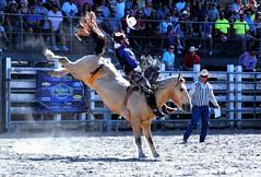 P3110149 (David W. Burrows) Tags: cowboys cowgirls horses cattle bullriding saddlebronc cowboy boots ranch florida ranching children girls boys hats clown bullfighters bullfighting