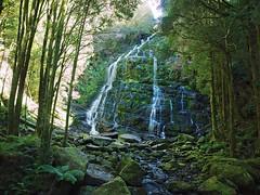 Nelson falls, Tasmania (nisudapi) Tags: 2017 australia tasmania queenstown lakestclair lyellhighway waterfall cascade nelson nelsonfalls