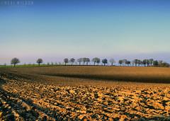 ploughed fields (Neal J.Wilson) Tags: denmark d3200 danishlandscapes danish nordic scandinavia jylland fields farming ploughed trees landscapes brown shadow silhouette nikon farm