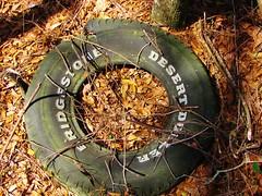 Bridgestone Desert Dueler (Gerry Dincher) Tags: tire bridgestone abandoned forgotten leaves woods bridgestonedesertdueler litter waste circle round riverroad bladencounty northcarolina