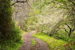 footpath (susodediego ) Tags: fincaelpinillo grancanaria canaryislands senderismo trekking olympusem10markii sigma29mmf28dn infinitexposure vividstriking soe contactgroups thegalaxy
