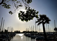 Evening on the Embarcadero (kimbar/Thanks for 2.5 million views!) Tags: boats evening embarcadero oakland california harbor sunset trees palmtree masts silhouette