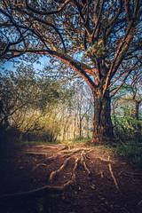 Idless woods pathway (paulbnashphotography.com - Sharpe Shooter) Tags: idless cornwall uk cornish tree path pathway sunburst sunlight bluebells