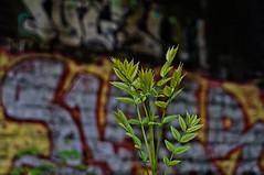 ([gegendasgrau]) Tags: atmo atmosphere ambiance mood moody stimmung urban city citylife stadt stadtleben graffiti graff writing art vandalism sadness tristesse melancholie bokeh wall plant pflanze blätter leafs chrome green grün silber outlines slayer dortmund 2016 spring frühling ruhrpott nrw