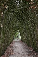 Sprookjesbos (Maurits van den Toorn) Tags: bos bospad bomen wood trees bäume landgoed landgut sprookje fairytale märchen nijenhuis overijssel landschap landscape