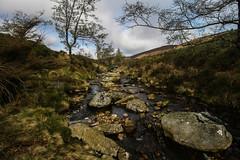 Dargle (A Costigan) Tags: dargle powerscourt wicklow ireland irish outdoor river stream water