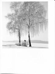 Weeping willow or The Winter Is Back  :-( (cardijo) Tags: landscape landschaft winter tree baum sw schwarzweis bw blackandwhite analog ilford multigrade print darkroom fp4 rolleiflex rodinal