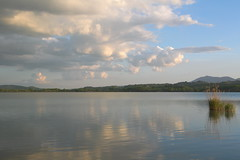 reed and clouds (phacelias) Tags: clouds nuvole wolken reed riet canna lagodichiusi chiusilake chiusi umbrie umbria italy sky cielo lucht