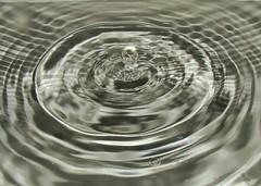 Drop (senemanli) Tags: drop macro water waterdrop reflection zoom mirror focus droplet selectivefocus midair article particles grey transparent