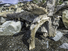 Former glory lost (Tony Tomlin) Tags: whiterock whiterockbeach bc britishcolumbia driftwood ocean boundarybay
