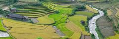 _Y2U7257-59.1013.La Pán Tẩn.Mù Cang Chải.Yên Bái (hoanglongphoto) Tags: asia asian vietnam northvietnam northwestvietnam outdoor panorama landscape scenery vietnamlandscape vietnamscenery vietnamscene terraces terracedfields terracedfieldsinvietnam harvest dale hillside house river canon canoneos1dx tâybắc yênbái mùcangchải lapántẩn phongcảnh ruộngbậcthang ruộngbậcthangmùcangchải lúachín mùagặt lúachínmùcangchải mùagặtmùcangchải thunglũng sườnđồi suối nhà ruộngbậcthangmùlúachín canonef70200mmf28lisiiusmlens