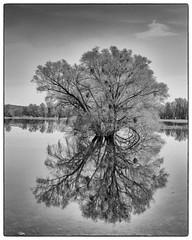 Nationalpark Unteres Odertal (Sciurus vulgaris) Tags: brandenburg wandergruppe baum spiegelbild spiegelung wasser oder odertal nationalpark sw bw