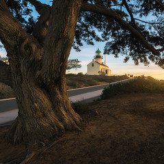 The Old Ones (David Colombo Photography) Tags: lighthouse tree sunset couple walking path road branches roots bark snake footprints sandiego pointloma california pacific ocean sky nikon d800 davidcolombo davidcolombophotography