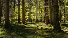 Lightspot (Sebo23) Tags: forest wald bäume licht lichtstimmung light green leaf blätter canon6d canon24704l
