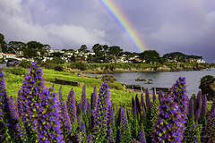 Blessed (ShutterFingrs) Tags: blessed rainbow loverspoint park pacificgrove