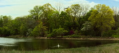 CSHL: Swan (Falcdragon) Tags: new york panorama usa coldspringharbor cshl
