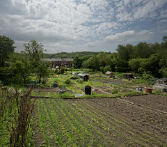The Allotments, Broadbottom (JEFF CARR IMAGES) Tags: day cloudy greatermanchester northofengland stonebuilt tameside englishvillages