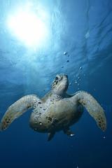 2012 12 METTRA OCEAN INDIEN 5463
