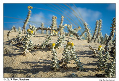 Miniature Landscape (Ilan Shacham) Tags: flowers sky plants macro yellow clouds forest landscape israel miniature view dune fineart scenic nitzanim fineartphotography