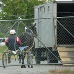 Ashburton Racecourse, Ashburton, New Zealand P1240259 thumbnail