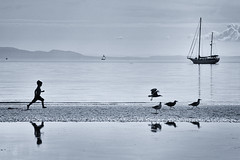 惊起一滩鸥鹭 (. Jianwei .) Tags: bird silhouette vancouver reflections boat seaside seagull a500 jianwei kemily