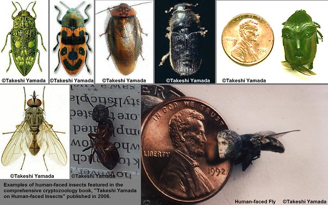 Human-faced insects on display at the Museum of World Wonders.