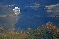 Autumn Moon (AvijitNandy) Tags: canon is exposure ii multiple 70200 f28l canon1dmarkiv 5dmarkiii