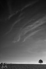 Study of Minimalism in Harden (sachman75) Tags: longexposure blackandwhite bw tree rural landscape afternoon farm farmland nsw newsouthwales minimalism harden canon1740mmf4 leefilters canon5dmarkii bigstopper leebdgrad4stops leegradnd12