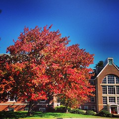 "Happy October from #UNH • <a style=""font-size:0.8em;"" href=""http://www.flickr.com/photos/69402606@N06/10038489574/"" target=""_blank"">View on Flickr</a>"