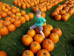 pumpkin (sonyacita) Tags: utata:project=tw389