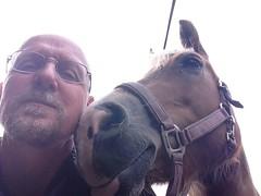 Altijd maar weer Sarah (gill4kleuren - 11 ml views) Tags: life horse me sarah fun outside happy running gill saar paard haflinger