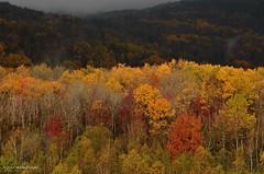 otter creek road (Explore) (paul noble photography) Tags: morning trees fall colors fog clouds landscape maine newengland foliage acadia eastcoast acadianationalpark mtdesertisland ruralmaine nikond7000 paulnobleimages paulnoblephotography