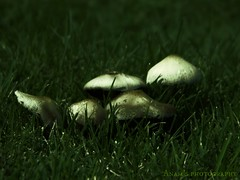 Mystical Mushrooms (Anam Sarmad) Tags: macro halloween garden mushrooms scary insects bugs creepy mystical monsters witches