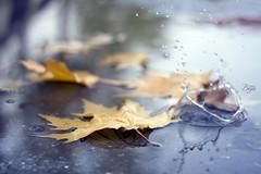 Suya Braklan... (Beyza G.) Tags: autumn water rain leaf su splash sonbahar yamur yaprak gz