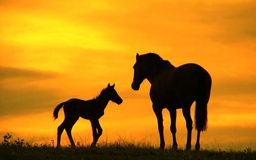 Beautiful Baby Horses Wallpaper Baby Horse Wallpaper
