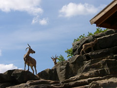 Berlin - Zoologischer Garten (Seesturm) Tags: berlin animals germany zoo tiere europa hauptstadt tiergarten zoologischergarten steinbock bundeshauptstadt 2013 seesturm