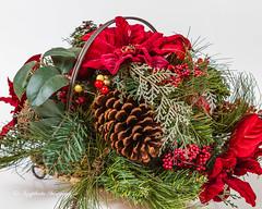 Christmas Centerpiece (augphoto) Tags: christmas decorations stilllife holiday evergreen centerpiece tabletop augphotoimagery